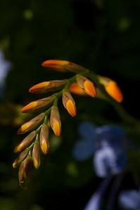 Orange finger nails-1