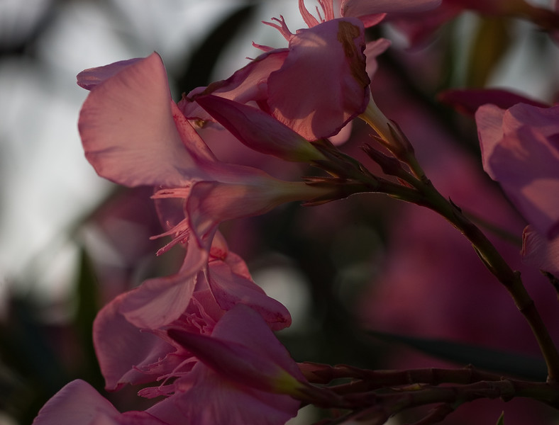 sunset in the flowers-26