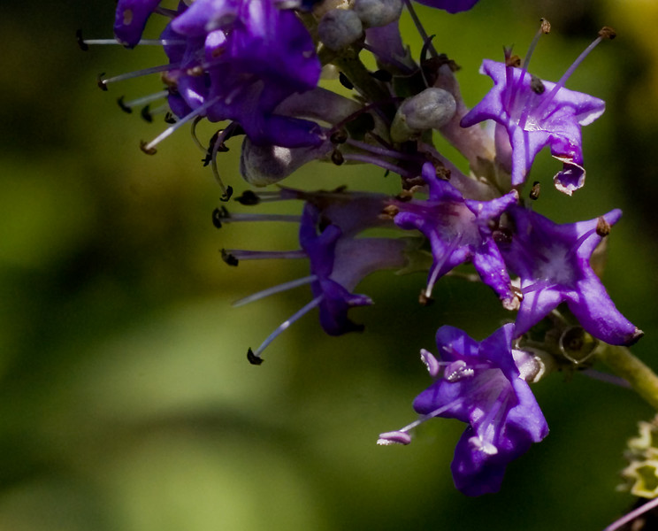 Blue Fleurettes-10