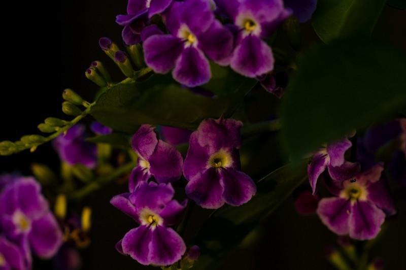 purple fluerettes-43