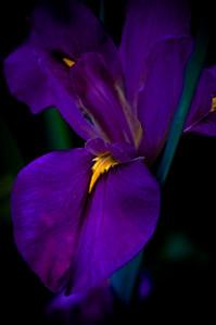 flower-5440
