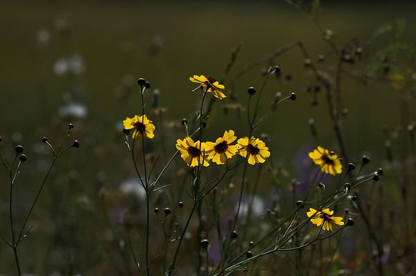yellow flowers-5893