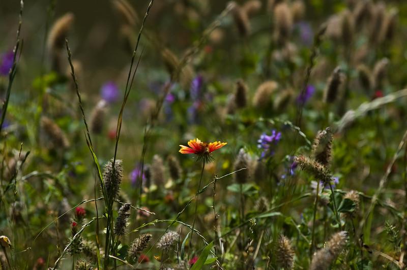 flowers-5909