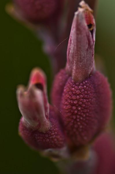 raspberry-6415