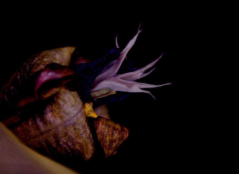 wild iris-5636