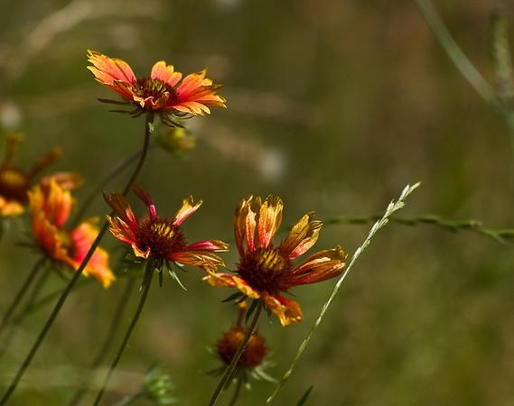 flowers-5906