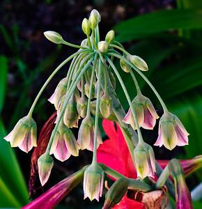 Unknown flower-0387