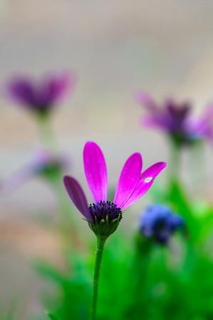 4 petals-1277