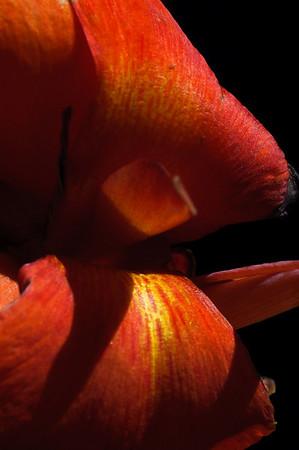 flower-2071
