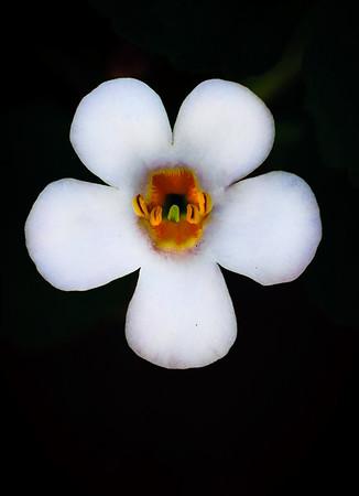 white flower-7825