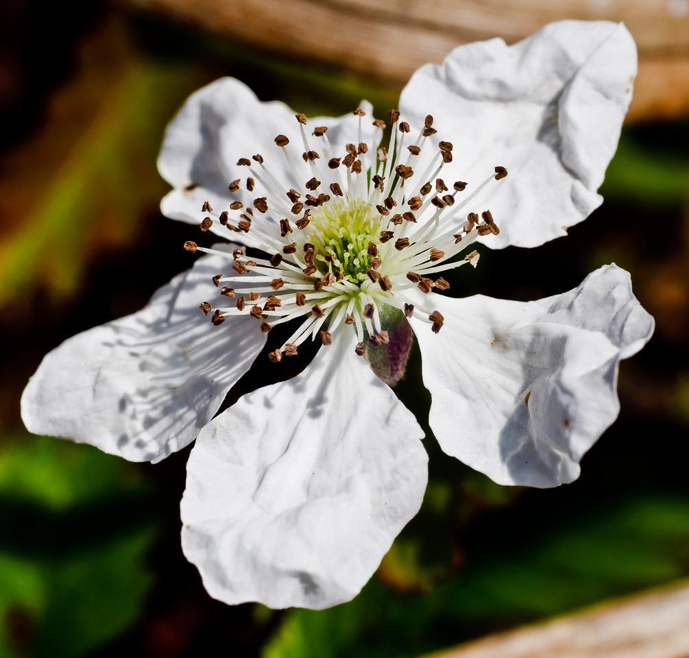 Wild flower-7345