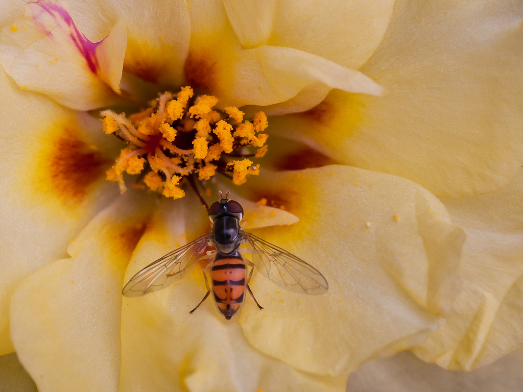 Beefly-7905