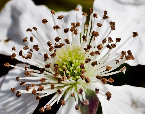 Wild flower-7345-2