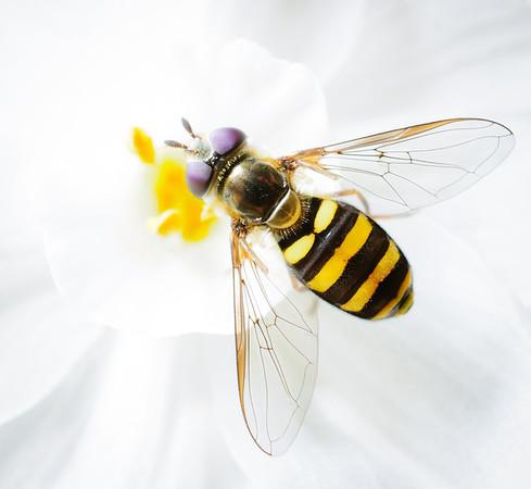 Bee-5723