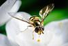Bee-5743