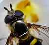 Bee-5735