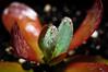 succulent-4796