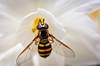 Bee-5730-2