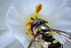 Bee-5722