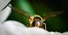 Bee-5742