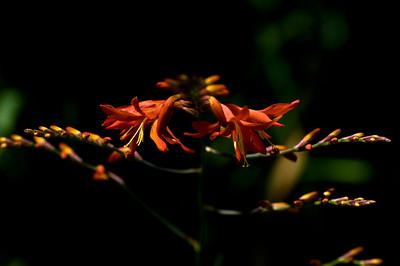 Orange flowers-6391