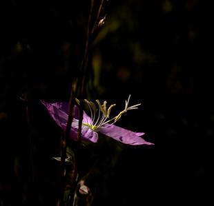 Flower-5962