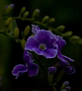 purple flower-6402