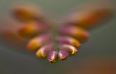 Orange flowers-6410-2