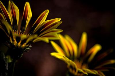 twin flowers-7988