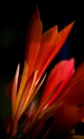 Flowering flame-8928