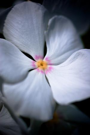 Star Flower-8120-3