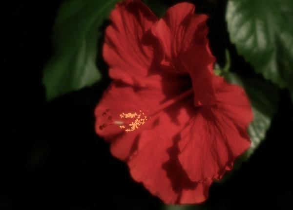 flora de sueno 02
