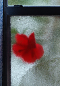 through the frosted glass 02