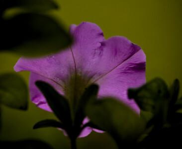 rainy day flora-9582