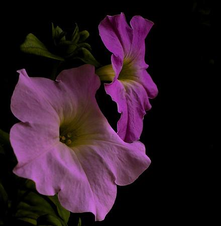 purple breezes-9366