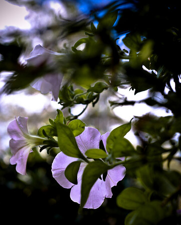 flowers against the sky-9368