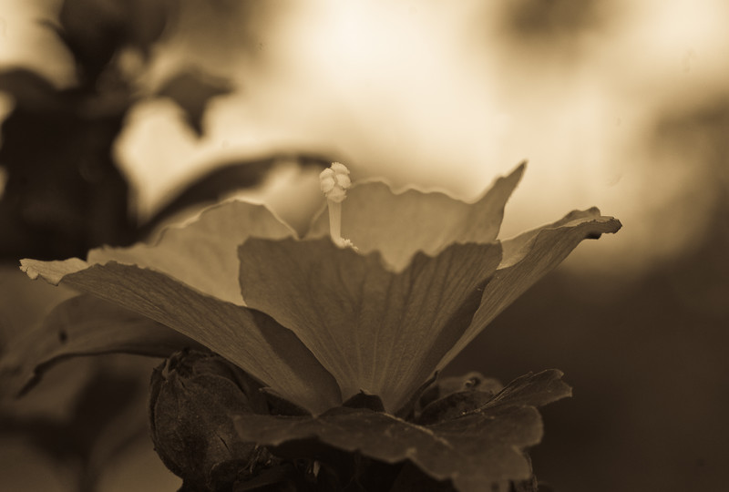 gray bloom antique-56
