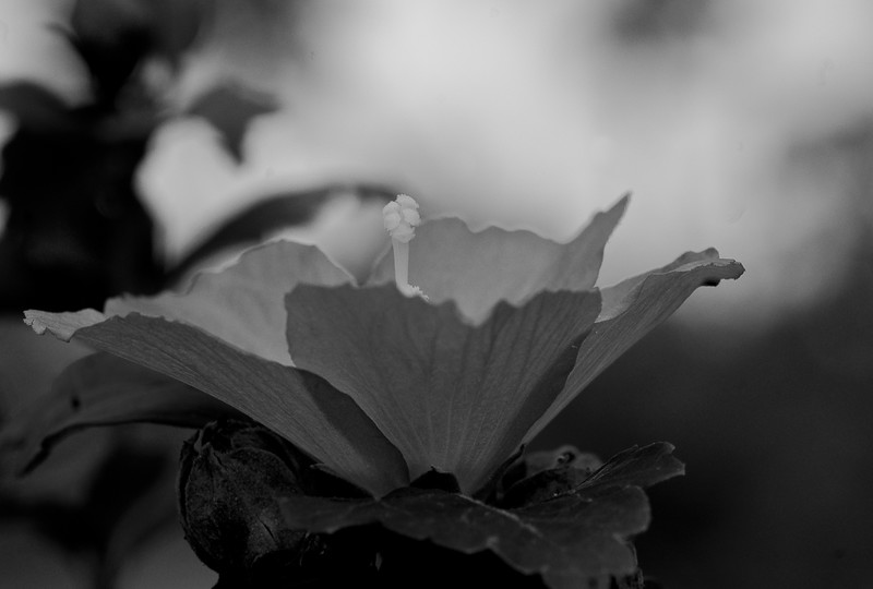 gray bloom-56