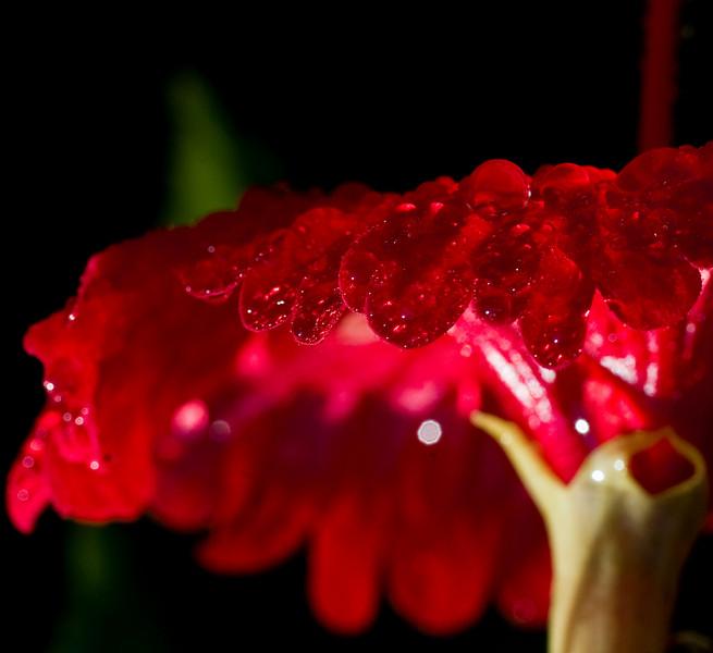 Danish flower-8941-2