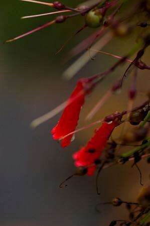 rainy day flora-9578