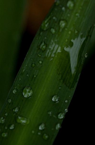 rainy day flora-9577