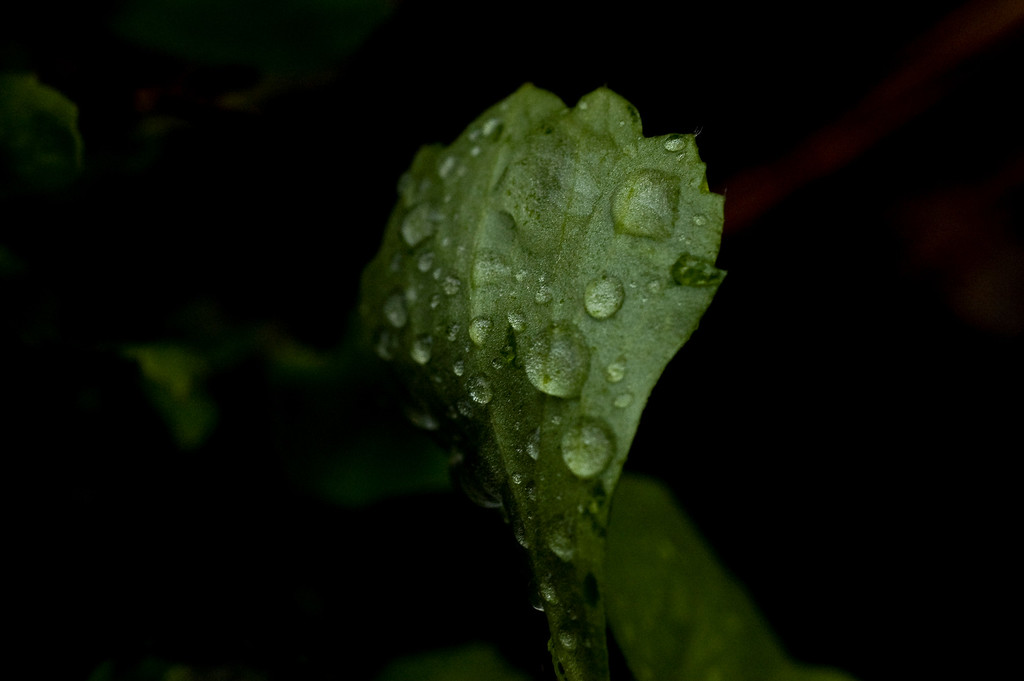 rainy day flora-9573