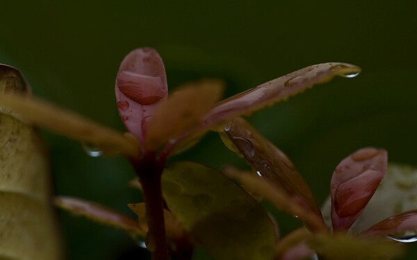 rainy day flora-9581