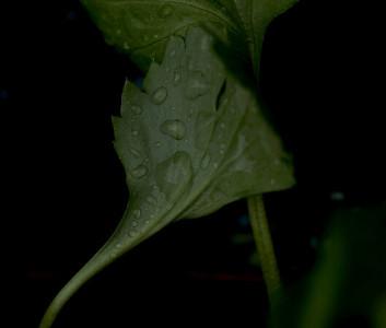 rainy day flora-9574