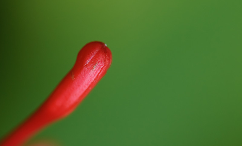 Red Drop-1860