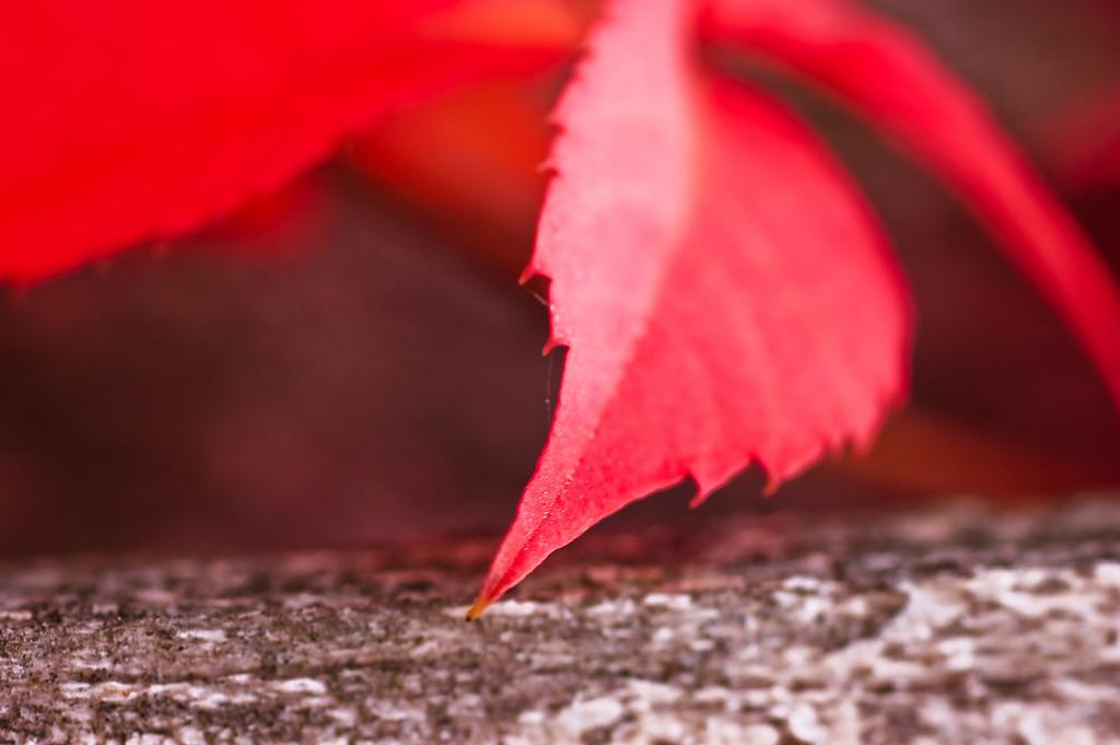 Leaf-1726