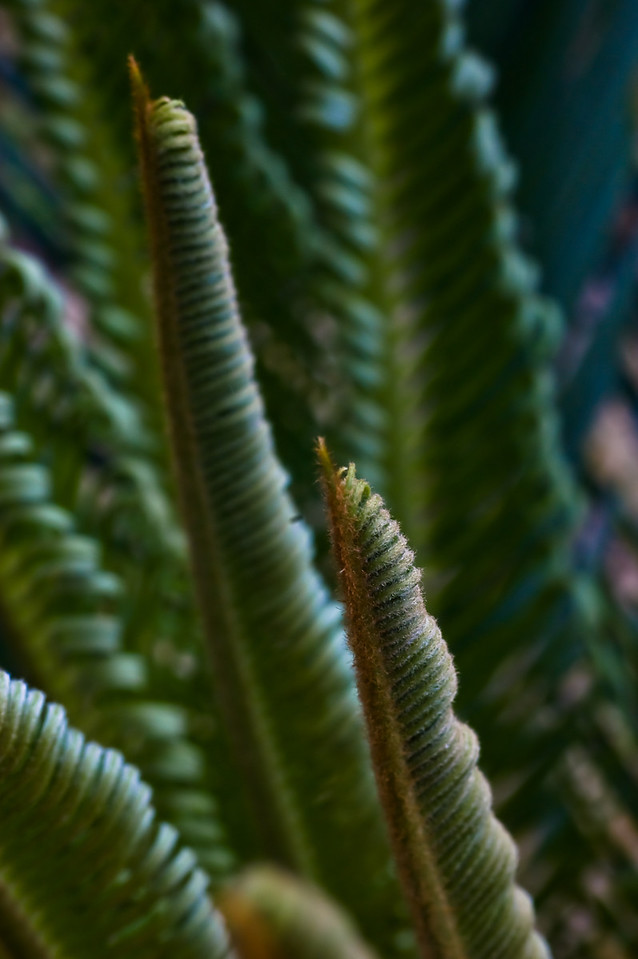 green combs-8483