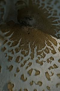 Mushroom-8540