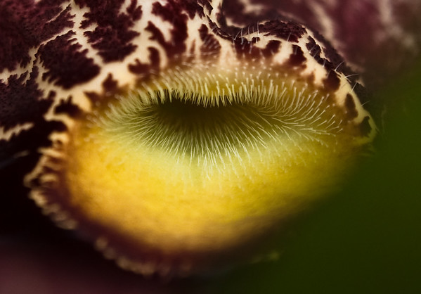 Yellow lips-2001