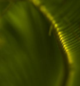 Green Dream-8479